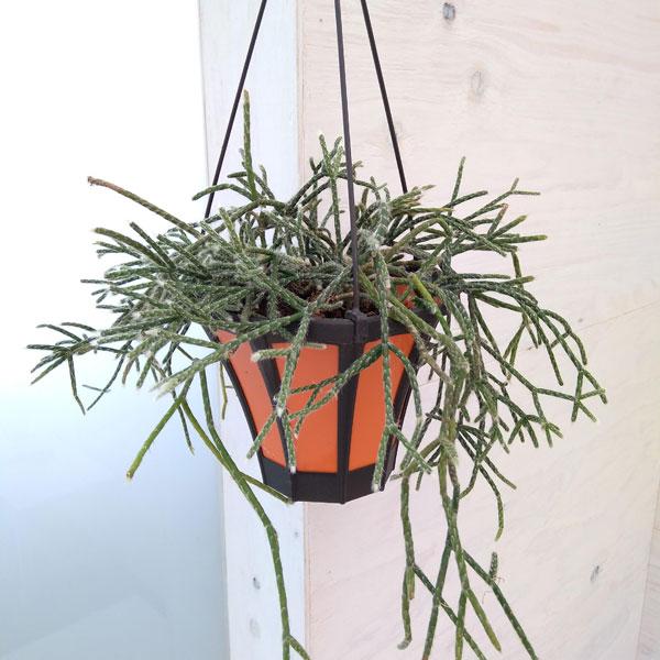 リプサリス ピロカルパ 5号吊り鉢入り 観葉植物 園芸ネット 本店 通販 Engei Net