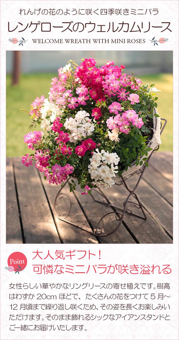 母 の 日 花 送料 無料