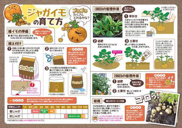ジャガイモ 植え付け 時期