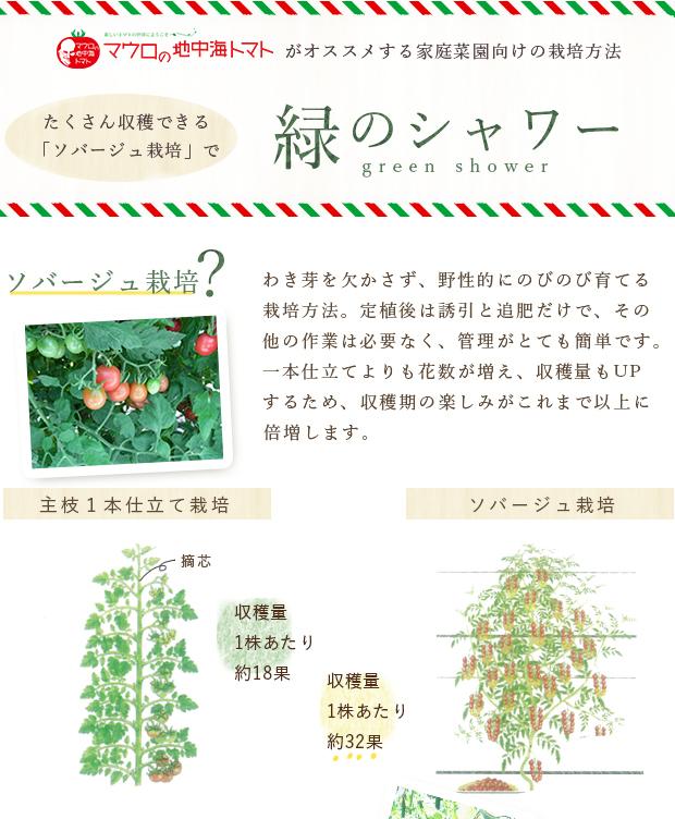 トマト の 育て 方